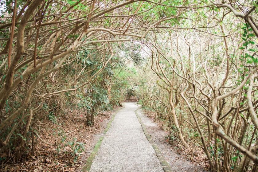Magnolia Plantation-20