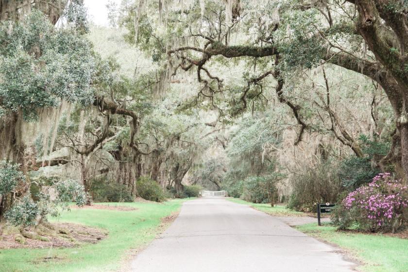 Magnolia Plantation-56