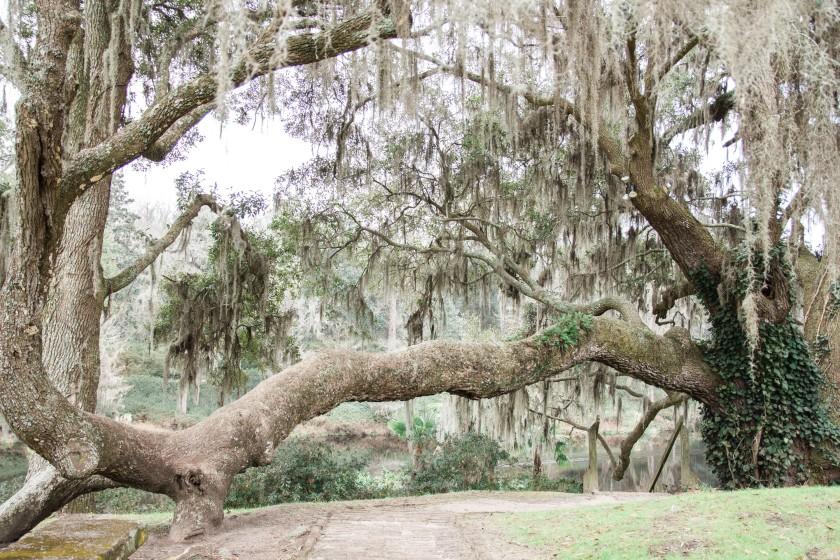 Magnolia Plantation-72