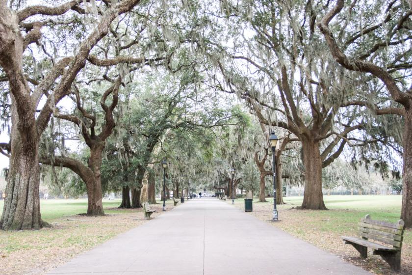 Savannah-19